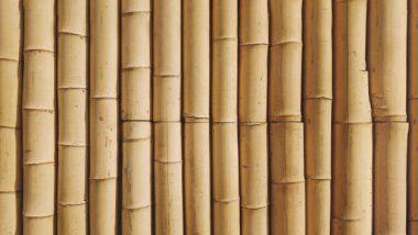 bamboehout